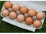 Diversos Unisex Kinei Ovos Vermelhos C/12